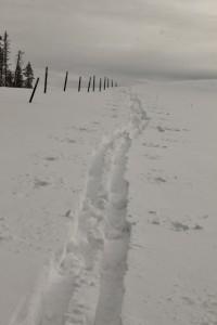Wolf Creek Peak Tracks